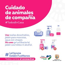 Recomendaciones para cuidar los animales de compañía en tiempos de pandemia