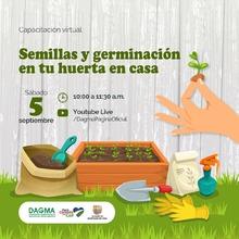 Semillas y germinación en tu huerta en casa