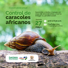 Manejo y Control de caracol africano