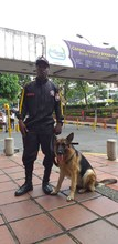 Perros antiexplosivos forman parte del equipo de seguridad del CAM
